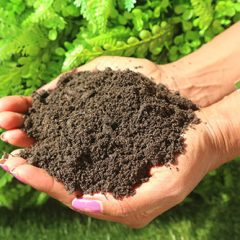Ericaceous Soil from MCM